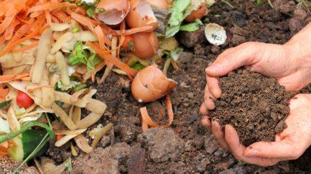 compost-domestique